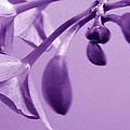 Purple Charm by Xueyin Chen
