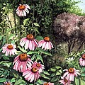Purple Coneflowers by Barbara Jewell