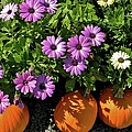 Purple Daisies And A Touch Of Orange by Jean Goodwin Brooks