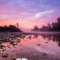 Purple Dawn by Davorin Mance