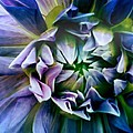 Purple Dream by Erin DeRosa