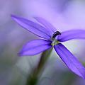 Purple Dreams by Annie Snel