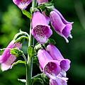 Purple Dreams by Neal Eslinger