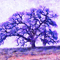 Purple Dreamtime Oak Tree by Priya Ghose