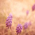 Purple Dreamy by Debi Bishop