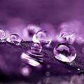 Purple Droplets by Shane Holsclaw