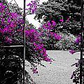 Purple Entrance by Douglas Barnard