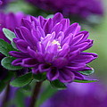 Purple Escape  by Neal Eslinger