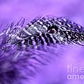 Purple Flight by Krissy Katsimbras