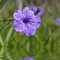 Purple Flower by Aged Pixel