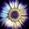 Purple Flower by Michele Monk