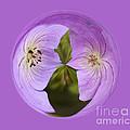 Purple Flower Orb by Darleen Stry