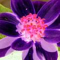 Purple Flower - Photopower 257 by Pamela Critchlow