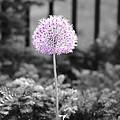 Purple Flower by Tracy Winter