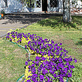 Purple Flowerbed by Evgeny Pisarev