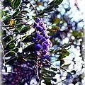 Purple Flowering Tree by Kathleen Struckle