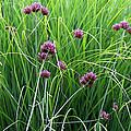 Purple Flowers And Grasses by Karen Adams