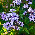 Purple Flowers by Brent Dolliver