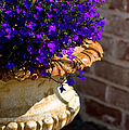 Purple Flowers by Brian Jannsen