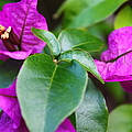 Purple Flowers by Catie Canetti