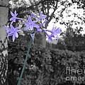 Purple Flowers by Erik Dunn
