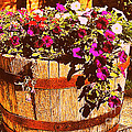 Purple Flowers In Rusty Bucket by Miriam Danar