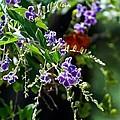 Purple Flowers by Linda Kerkau