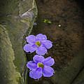 Purple Flowers by Patricia Hofmeester