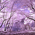 Purple Forest by Paul W Faust -  Impressions of Light
