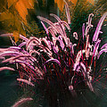 Purple Fountain Grass Fantasy by Mick Anderson
