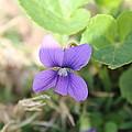 Purple Garden Flower by Khoa Luu