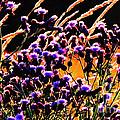 Purple Glory by Ron  Tackett