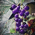 Purple Grapes - Oil Effect by Brian Wallace