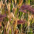 Purple Grasses by Meghan at FireBonnet Art