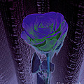 Purple Green Dark Rose by Minding My  Visions by Adri and Ray