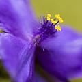 Purple Haze by Caitlyn  Grasso