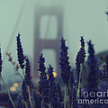 Purple Haze Daze by Jennifer Ramirez