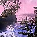 Purple Haze by Marty Koch