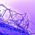 Purple Haze Part 2 by Alex Hiemstra