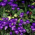 Purple Hearts by Rodney Lee Williams
