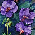 Purple Hibiscus by Jane Ricker