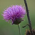 Purple In Nature by Maria Urso