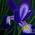 Purple Iris by Barbara Griffin