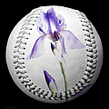 Purple Iris High Key Baseball Square by Andee Design