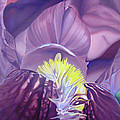 Georgia O'keeffe Style-purple Iris by Joshua Morton
