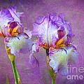 Purple Iris by Lena Auxier