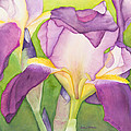 Purple Irises by Sandra Neumann Wilderman