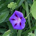 Blume-bestaubung by James Paul Grierson