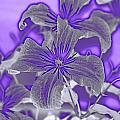 Purple by Kandace Little