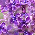 Purple Lilacs by Janice Pariza